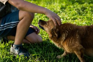avantaje animal comapnie